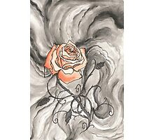 So Like a Rose Photographic Print