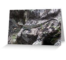 Eastern Water Dragon - Physignathus lesueurii Greeting Card
