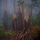 In The Woods - Mount Wilson and Mount Irvne - The HDR Experience by Philip Johnson