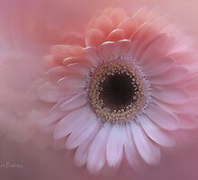 Blush by Jan Pudney