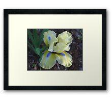 Playful Iris Framed Print