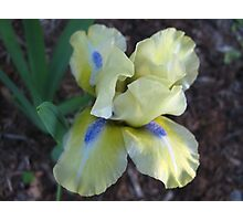 Playful Iris Photographic Print