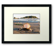 scattered shells Framed Print