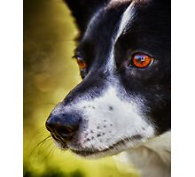 The love in her eyes Photographic Print