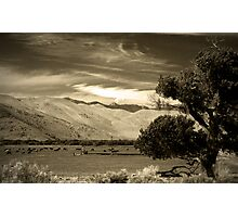 Mooo-dy Landscape in Sepia  Photographic Print