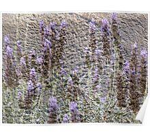 Lavender Grunge Poster