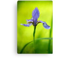 Blue Japanese iris Canvas Print