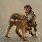 Youch!!! You bit my willy! by Explorations Africa Dan MacKenzie
