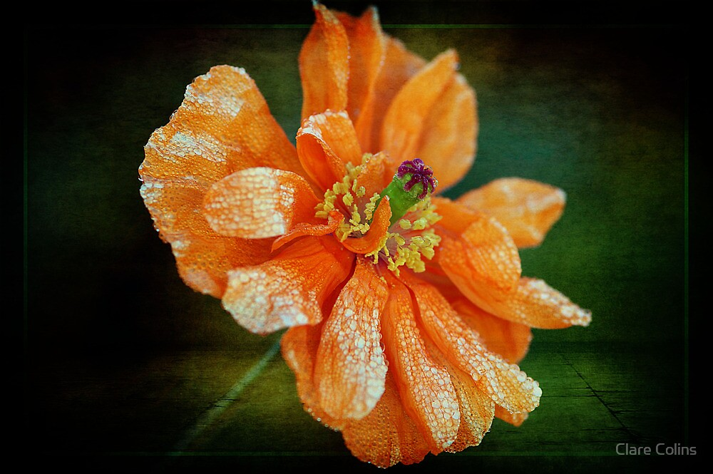 Orange by Clare Colins