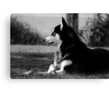 Husky 2 Canvas Print