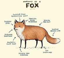 Anatomy of a Fox by Sophie Corrigan