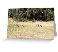 Kangaroos at Cardinia Reservoir Park, Victoria Greeting Card