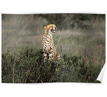 As a Cheetah Cries Poster