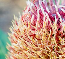 Banksia Sunset by Kell Rowe