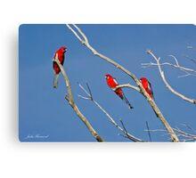 Crimson Rosella Canvas Print