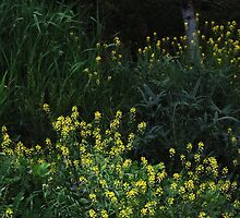 Yellow Daubs by RVogler
