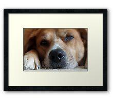 Dog Tired Framed Print