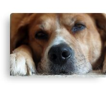 Dog Tired Canvas Print