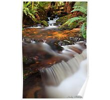 """Forester Cascades"" Poster"
