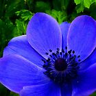 Blue flower - for iphone by Penny Kittel
