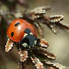 Ladybird by marens