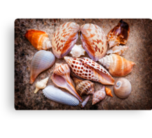 Seashells of Sanibel Island Canvas Print
