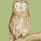 Tawny Owl by Sophie Corrigan