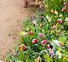 Spring Border by Anne Gilbert