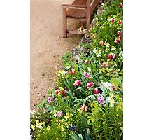 Spring Border Photographic Print