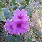 Arizona Wild Flower - purple by carol selchert