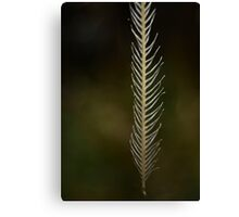 Strong Wisps Canvas Print