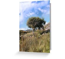 strong isolated mountain tree Greeting Card