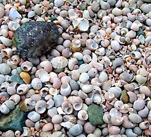 Winkles and crab. by Altronix