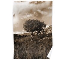 strong isolated mountain tree in sepia Poster