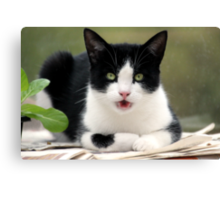 Chatterbox Cat Canvas Print