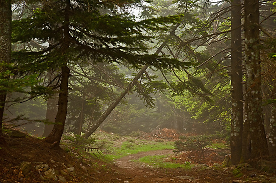 Early morning fog in the forest by Konstantinos Arvanitopoulos