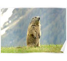 Marmot Poster