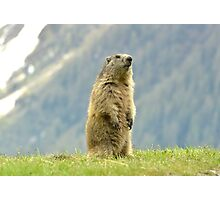 Marmot Photographic Print