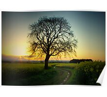 Sunrise and Rapeseed Poster