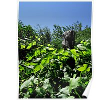 Grape Leaves And Old Wood Poster