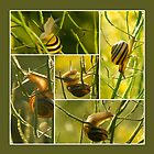 Snail acrobatics in the rapeseed - card by steppeland-2