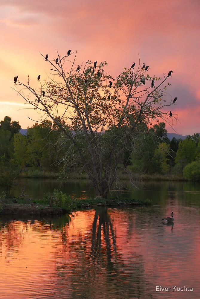 Evening at Kountze Lake by Eivor Kuchta