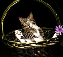 Bodhi the Basket Cat by TheBluePlanet