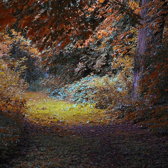 A Lonesome Walk by Martin Crush