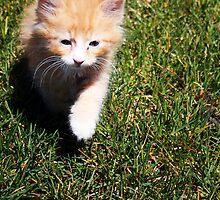 Ronald (Ron) the Kitten by Jewel Pfaffroth