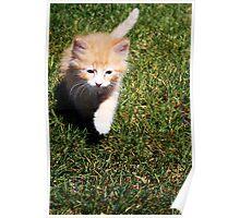 Ronald (Ron) the Kitten Poster