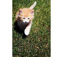 Ronald (Ron) the Kitten Photographic Print