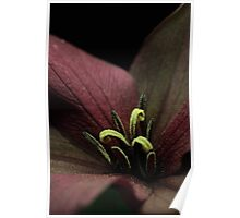 Closer to a Red Trillium Poster