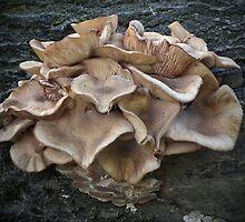 Tree Fungi by LydiaBlonde