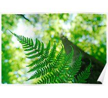 Fern leaf and spring forest Poster